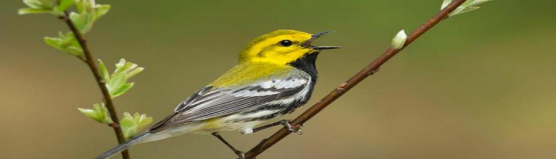 Bird Walk - Davisburg
